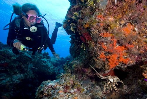 The Top 10 Health Benefits Of Scuba Diving
