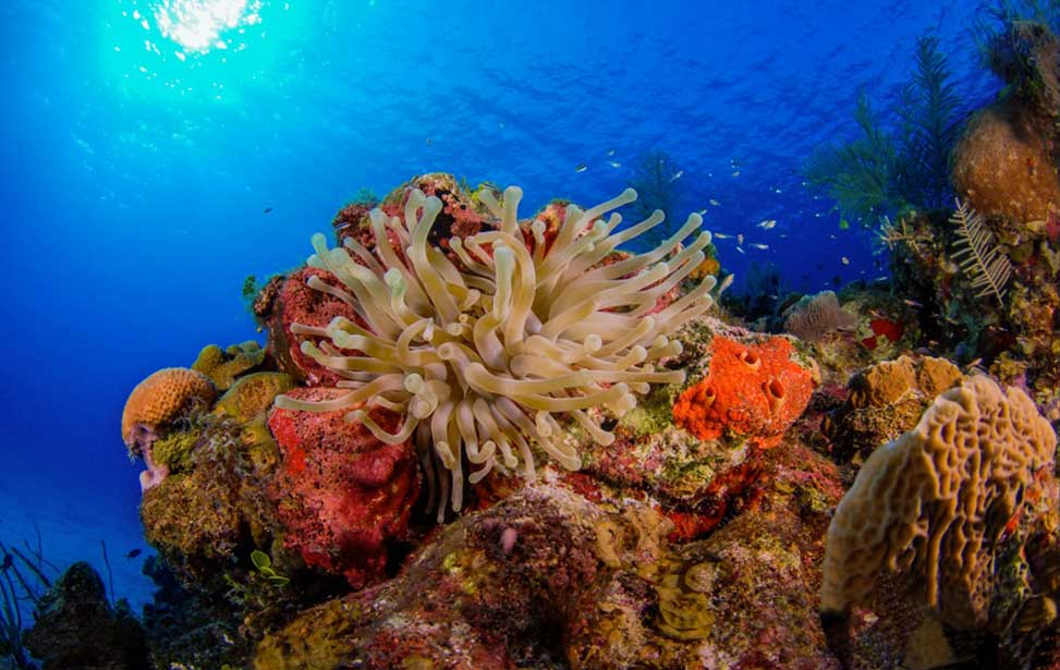 Coral Reefs - by Andrew Pressly
